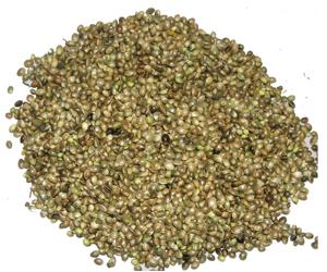 Cannabis sativa Linn