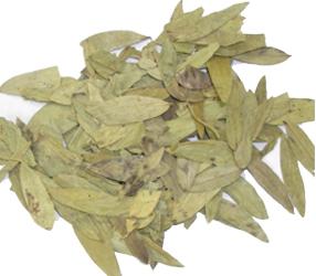 Cassia angustifolia Vahl