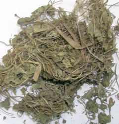 Centella asiatica Linn
