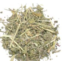 Chrozophora plicata A