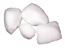 Cinnamomum camphora T
