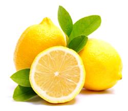 Citrus lemonum Sp
