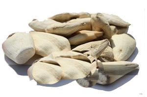 Colchicum luteum Baker
