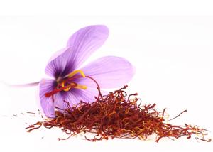 Crocus sativus Linn