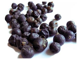 Juniperus communis Linn