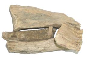 Saussurea lappa Clarke
