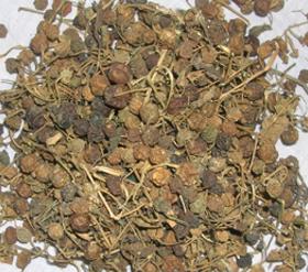Solanum nigrum Linn