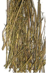 Swertia chirata Buch