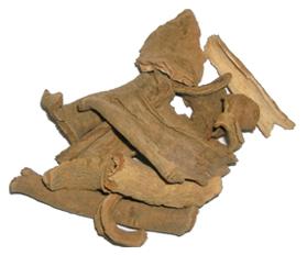 Symplocos racemosa Roxb
