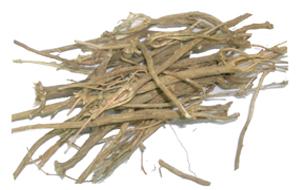 Tanacetum umbelliferum Boiss