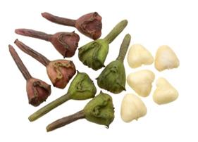 Trapa bispinosa Roxb