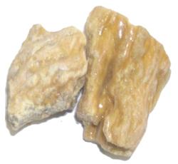 Vateria indica Linn