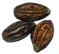 erminalia chebula Retz